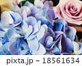 Blue Hydrangea and purple rose 18561634