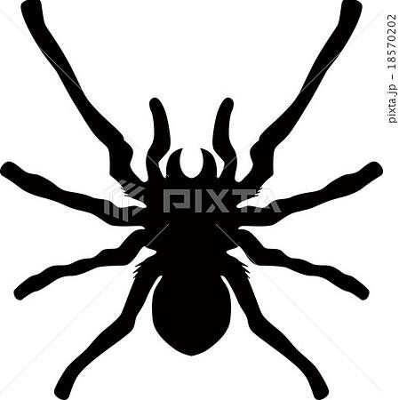 蜘蛛のイラスト素材 18570202 Pixta