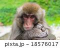 手を揃えてこちらを見る猿 18576017