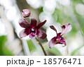red flower 18576471