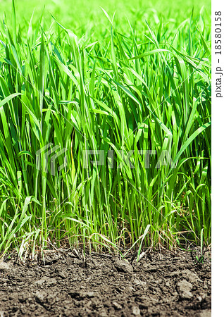 Green grass and soil 18580158 pixta for Soil and green