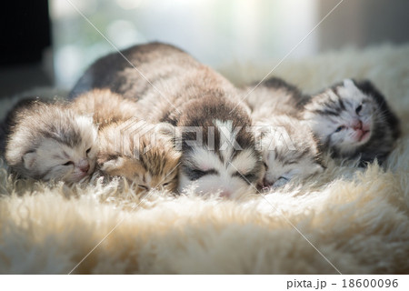Puppy lying with kittens