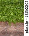 レンガ アイビー 壁の写真 18602202