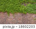 レンガ アイビー 壁の写真 18602203