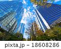 高層ビル 街路樹 品川インターシティの写真 18608286