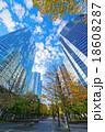 高層ビル 街路樹 品川インターシティの写真 18608287