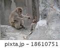 親猿が小猿を見守る 18610751