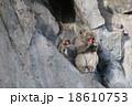 親猿と小猿-3 18610753