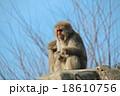 岩山の猿 18610756