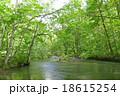 奥入瀬渓流の流れ 18615254
