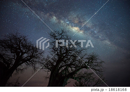 Milky way over baobab tree, Tanzania