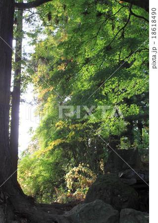 樹木の緑 18618490