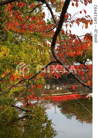 紅葉と太鼓橋の紅 18618492