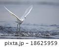 コサギ 鷺 白鷺の写真 18625959