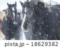 雪と馬 18629382