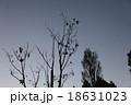 樹木 18631023