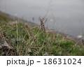 草 18631024