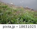 草 18631025