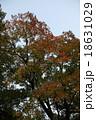 樹木 18631029