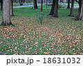 落葉 18631032