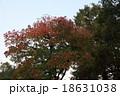 紅葉 18631038