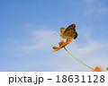 キバナコスモスとツマグロヒョウモン 18631128