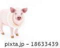豚に真珠 ことわざ 豚の写真 18633439