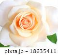 薔薇 18635411