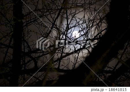 枝の隙間からのぞく満月 18641015