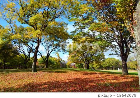 大阪 秋の鶴見緑地 18642079