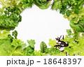 野菜 サラダ サラダ野菜の写真 18648397