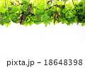 野菜 サラダ サラダ野菜の写真 18648398