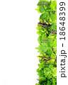 野菜 サラダ サラダ野菜の写真 18648399