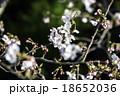 桜(グリーンバック) 18652036