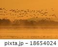 宮城県栗原市 伊豆沼の朝 18654024