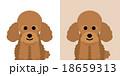 トイプードルのキャラクター 18659313
