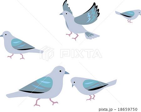 鳩 18659750