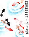 金魚 魚 波紋のイラスト 18665052