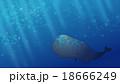 マッコウクジラ くじら クジラのイラスト 18666249
