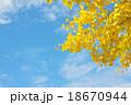 黄葉 秋 イチョウの写真 18670944