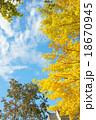 黄葉 秋 イチョウの写真 18670945