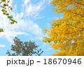 黄葉 秋 イチョウの写真 18670946