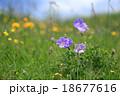 Purple wild flower in yellow wild flower field 18677616
