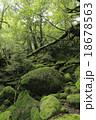 6月初夏 屋久島の苔むす森ー白谷雲水峡の原生林 18678563