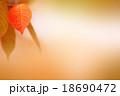 紅葉 18690472