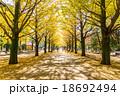 【東京都】光が丘公園のイチョウ並木 18692494