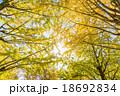 【東京都】光が丘公園のイチョウ並木 18692834