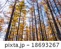 【栃木県日光市・戦場ヶ原】朝日を浴びる秋のカラマツ 18693267