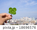 綺麗な四つ葉のクローバーを福岡と青空を背景に 18696576