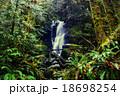 森林 林 森の写真 18698254